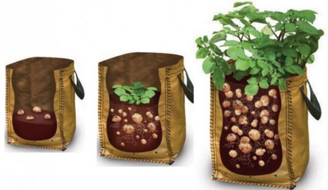 1440217784-growing-potatoes-in-bags